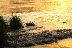 IMG_6237 (Ana Danesh) Tags: sunset river shoreline driftwood
