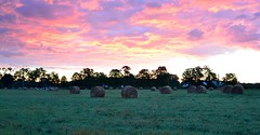 Hay bales in the background of burning clouds (YanXing言行) Tags: tree sunrise haybales burningclouds