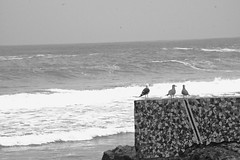 Three Pals (Krass2533) Tags: peru birds wall sand rocks waves squares gulls gray worldlooks