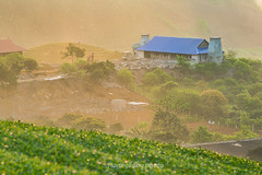 _Y2U0469+75.0317.Tân Lập.Mộc Châu.Sơn La. (hoanglongphoto) Tags: asia asian vietnam northvietnam northwestvietnam outdoor landscape scenery vietnamlandscape vietnamscenery vietnamscene countryside countrysideinvietnam countrysidehouse hillside treehill canon canoneos1dx canonef200mmf28liiusmlens morning mist sunlight sunny sunnymorning tâybắc sơnla mộcchâu tânlập phongcảnh buổisáng sươngmù nắng nắngsớm ngôinhà sườnđồi đồicây làngquê nôngthôn làngquêviệtnam nôngthônviệtnam hdr