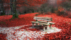 Descanso otoñal (Mimadeo) Tags: bench chair autumn forest leaf red tree beauty color colorful december landscape leisure loneliness lonely nature nobody november october orange outdoors park peace relaxation rest resting season seat silence solitude woods