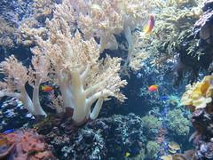 00734948 Aquarium Berlin 1 - 2017 (golli43) Tags: aquariumberlin zoo fische krokodile quallen wasser wasserpflanzen amphibien insekten unterwasserwelt