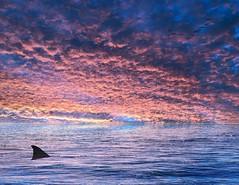 Sunday shark sea slide (cheezepleaze) Tags: sunset storm birds shark ocean hss blended iphone jaws