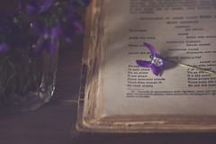 Je suis aimé (Ali Llop) Tags: book flower spring floral light beautiful airy arrangement bloo bouquet decoration delicate elegant flora fragile fresh nature pale pretty romantic simple small soft glass purple