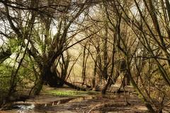 Spring at alluvial water (yve_all) Tags: alluvialwater schwemmland natur nature licht light farben colours biotop seelenheil soul landschaft landscape blickwinkel view bäume trees