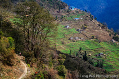 Rural Landscape, Chhomrong, Annapurna, Nepal (Feng Wei Photography) Tags: travel nepal terrain house mountain color tourism beautiful beauty horizontal rural trekking trek landscape town scenery colorful asia village view terrace outdoor path scenic peaceful hike serenity vista remote serene agriculture annapurna breathtaking trekker chhomrong gandaki terracedfield kaski ghurjung
