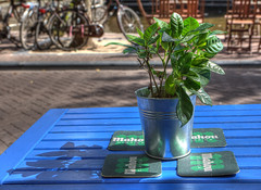 plant in silver bucket (n.a.) Tags: blue plant holland green netherlands leaves amsterdam silver table bucket nl hdr
