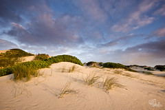 First Light - Arniston Sand Dunes (Mujahid's Photography) Tags: winter sky green june clouds sunrise southafrica bush sand dune sanddune westerncape arniston 2013 nikond800 mujahidurrehman nikon1635mm mujahidsphotography