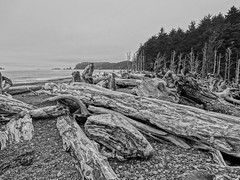 Driftwood (Dodge Rock) Tags: nature zeiss sony rialtobeach olympicbeach hx300