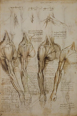 Da Vinci, The Mechanics of Man [5/7] (christopher_brown) Tags: uk greatbritain travel notebook scotland sketch edinburgh estate notes unitedkingdom pages britain drawing davinci drawings palace page leonardo sketches holyroodpalace thequeensgallery leonardodavinci themechanicsofman
