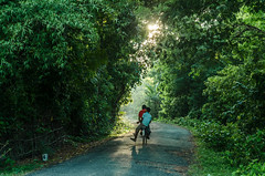 journey through heaven... (Gopinath Ram (Gopi)) Tags: road light india nature photography nikon heaven photographer village indian country bamboo ram pondicherry indianvillage indianstreet gopinath gopiphotography gopinathram