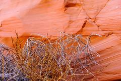 USA West (Edi Bähler) Tags: arizona usa plant nature rock unitedstates natur pflanze erosion page fels ferien antelopecanyon vereinigtestaaten 2470mmf28 rocksstones nikond3 felsensteine
