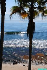 Laguna159 (mcshots) Tags: ocean california travel autumn sea usa seaweed beach nature water coast scenery rocks stock sealife socal kelp orangecounty mcshots reef