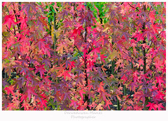 autumn (Den Boma Files) Tags: park autumn red orange sun white plant color tree green fall texture nature beautiful leaves yellow closeup forest season leaf maple pattern natural bright background seasonal sunny nobody nopeople change concept autumnal isolated