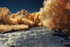 gold dust river
