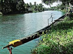 Karichal Snake Boat @Thazhathangadi (Rajesh Kalapura) Tags: india kerala noel southindia kottayam boatrace snakeboatrace vallamkali chundanvallam karapuzha veppu thazhathangadi champakkulam chundanvallom karichal jesusboatclub kumarakomtownboatclub iruttukuthi rajeshkalapura vellamkulangara sreekarthikeyan jawaharthayankari dayino1 thuruthithara 3thaikkan ajiben anilkalapura stfrancisboatclub villageboatclub