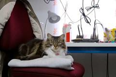 making-wcb 36 (oskay) Tags: cat diode shopcat zener catprinter