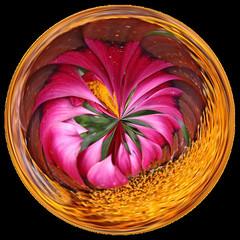 Amazing Circle (Ana Puzar) Tags: art circle gimp orb amazingcircles sphere spheres digitalmanipulation