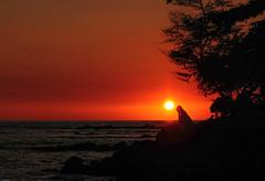 Pensive (fenicephoto) Tags: sunset beach hawaii kona wonderworld