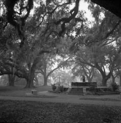 NOLA City Park (Jeff Wingard) Tags: 120 film fog mediumformat blackwhite kodak neworleans trix 400tx hasselblad citypark kodaktrix400 hasselblad503cxi hasselbladcxi kodaktrix400400tx