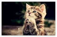 صور 2014، صور قطط مضحكة، صور مضحكة للفيس بوك، صور قطط روعة 2014