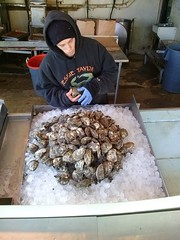 Oyster Master (mdanys) Tags: usa dc washington seafood oysters oyster danys mdanys