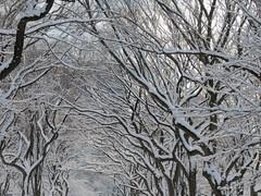 Let It Snow #11 (Keith Michael NYC (2 Million+ Views)) Tags: nyc ny newyork centralpark manhattan