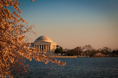 DSC_3108-5 (yurivestil) Tags: flowers sunset sun leaves weather cherry dc washington spring warm blossom crowd basin tidal