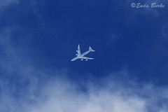 Cargolux Boeing 747-8F LX-VCE 12-5-2014 (Enda Burke) Tags: sky man canon airplane manchester contrail aviation aeroplane boeing luxembourg contrails boeing747 747 aero cargolux freighter manchesterairport manc egcc av8 avgeek canon700d manairport 748f boeing748f lxvce manchesterrunwayvisitorpark