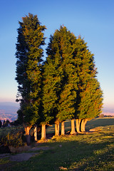 group of trees (Mimadeo) Tags: blue trees light sunset summer sky sunlight tree green nature leaves sunshine forest woodland landscape spring woods branch group sunny trunk trunks coniferous treetop