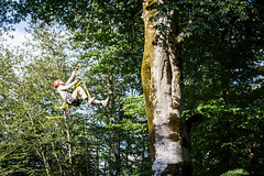 Expedition climber Weston Forster begins  jugging up the trunk of a 40 meter tall Beech Tree in Tiblisi National Park, Republic of Georgia - August 2016 (tenacityinpursuit) Tags: westonforster georgia treeclimbing republicofgeorgia ascending jugging