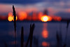 Heptagon (ewitsoe) Tags: sunset mood ambience atmosphere seattle grass blades erikwitsoe ewitsoe nikon d80 sun dusk city water bay elliot spring cityscpae washingtonwest cityscape urban