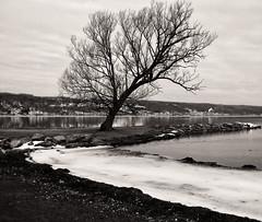 Winter's Remnants at Seneca Lake (LJS74) Tags: senecalake fingerlakes newyorkstate clutepark watkinsglen lake shore leaflesstrees nature blackandwhite blackwhite bw monochrome