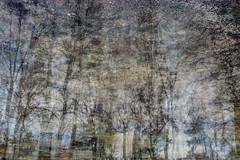 Puddles (Multiple Exposure) 88 (pni) Tags: tree reflection ice water puddle multiexposure multipleexposure tripleexposure lapinlahti lappviken helsinki helsingfors finland suomi pekkanikrus skrubu pni