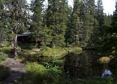 01-IMG_8386 (hemingwayfoto) Tags: österreich austria baum europa fichte hohetauern landschaft nationalpark natur naturschutzgebiet rauris rauriserurwald reise tannenbaum urwald wald