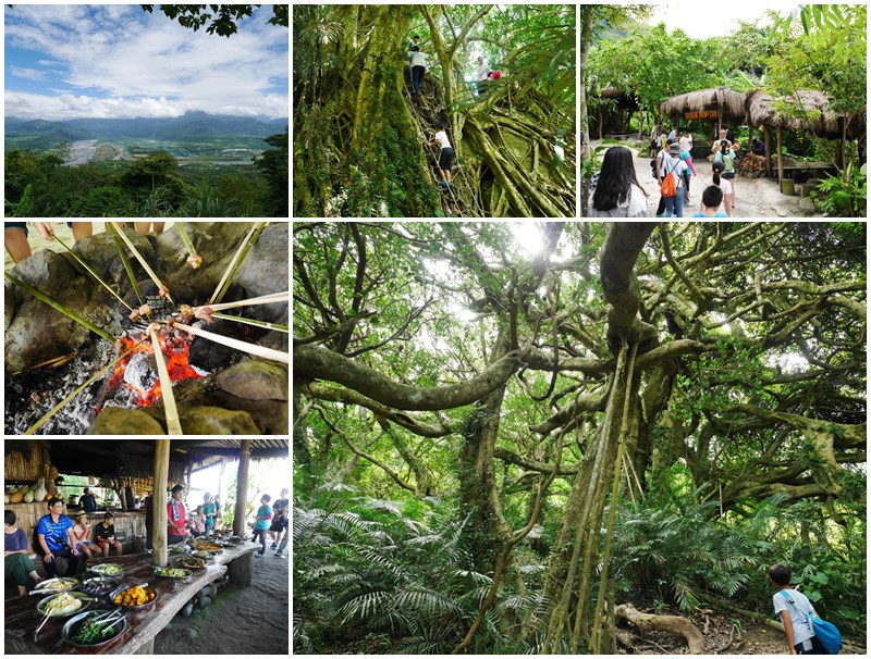 鸞山森林博物館.台東景點.祕境.會走路的樹.阿凡達page