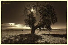 Jugant amb el sol (lowden025) Tags: alone atmosfera arbres beauty blackwhite bw cute canon canon6d calm clouds dark deep eos field ground horitzon hivern sky landscape light like love lee nice nature natura núvols negre naturaleza outdoors oblidat ombres paisatge paisatges branques solitud shadow sigfridprimribes sun tamron2470 wild world winter waterless way wood z