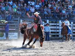 P3110185 (David W. Burrows) Tags: cowboys cowgirls horses cattle bullriding saddlebronc cowboy boots ranch florida ranching children girls boys hats clown bullfighters bullfighting