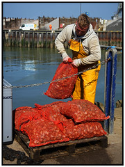 Unloading the whelk catch (exreuterman) Tags: whitstable beach sand river thames estuary kent harbour legacy lens canon 28135 ef viltrox adapter sony a7 mirrorless 24mpx