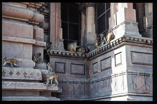 Govind dev Temple , Vrindavan - Uttar Pradesh - India