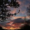 Magnolia sunrise (Steve-h) Tags: nature natur natura naturaleza sunrise dawn magnolia tree cameraphone iphonography appleiphone6s steveh dublin ireland europe spring april 2017 lightroom mobile