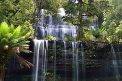 Russell Falls - Mount Field National Park - Tasmania (Robert J Wilson) Tags: waterfall tasmania rainforest water watercourse australia d3200 forest falls foliage ferns green nikon landscape leaves nikond3200 nature outdoor plant rocks serene tamronaf18270mmf3563diiivcldasphericalif tamron vegetation z