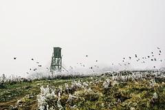 i swear to god it's true, i'm coming home to you (lina zelonka) Tags: kirn germany nahetal linazelonka winter frost nature birds vögel landscape countryside naheland hunsrück deutschland europe europa rheinlandpfalz rlp rhinelandpalatinate nikond7100 18105mm