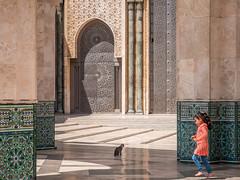 Untitled (mizaweb) Tags: hassan mosque hassaniimosque casablanca marocco morocco x30 fuji fujifilm cat gatto moschea