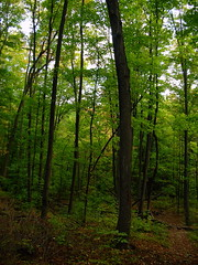 Bruce Trail in Spring (haunted snowfort) Tags: trees ontario green forest spring niagara brucetrail kinsmenpark beamsville