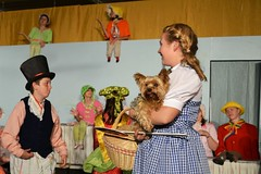 """Wizard of Oz 2013 • <a style=""""font-size:0.8em;"""" href=""""https://www.flickr.com/photos/95913666@N05/9552933286/"""" target=""""_blank"""">View on Flickr</a>"""