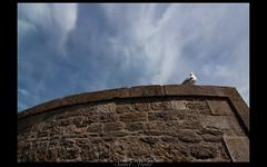 (Lilith Ecate) Tags: france brittany bretagne mura francia gaviota gabbiano saintmalo bretagna
