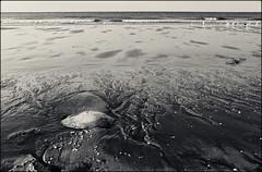 Aguamala (Santhero) Tags: blackandwhite bw espaa digital lumix andaluca huelva paisaje panasonic medusa lepe dsz laantilla aguamala playasdehuelva fz8 lumixfz8 santhero bwfp digitalsuperzoom fotosanthero
