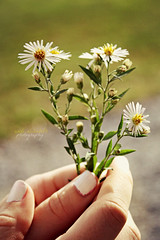 a c c i d e n t a l l y  i n  l o v e ([ andi ]) Tags: flowers green nature beautiful beauty canon photography holding elizabeth hand natural fingers bouquet andi canonrebelxs