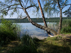 Feisnecksee (alustar99 - offline) Tags: nature germany deutschland nationalpark natur mecklenburgvorpommern müritz waren feisneck müritznationalpark feisnecksee